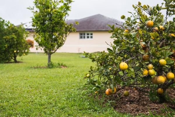 fruittrees