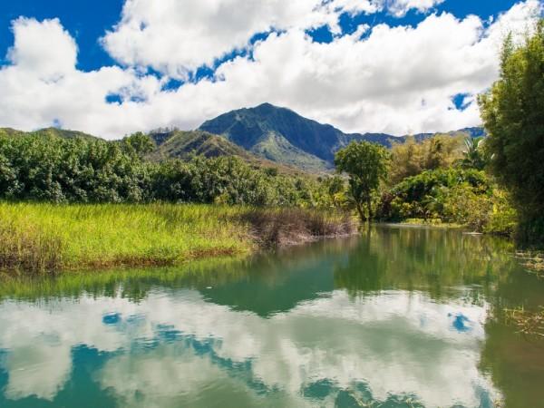 Waipa Mountain View