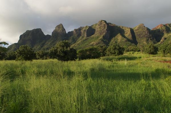 Moloaa Mountain 2