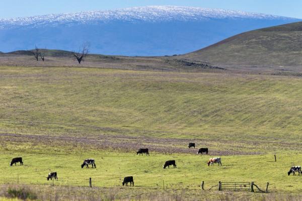 Cattle Mountain 1