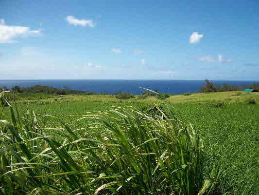 50 acres Honopueo