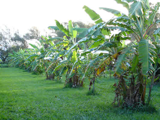 Permaculture property for sale in Hawi