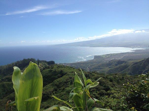 Maui copy