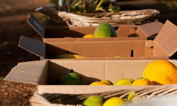 Produce at Hawi Farmers Market