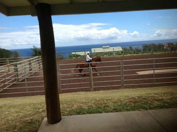 Hawaii Paso Fino segment of HGTV Episode