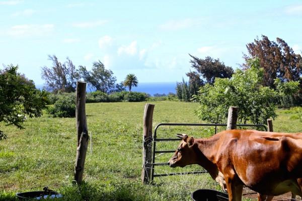 Ag land for sale North Kohala
