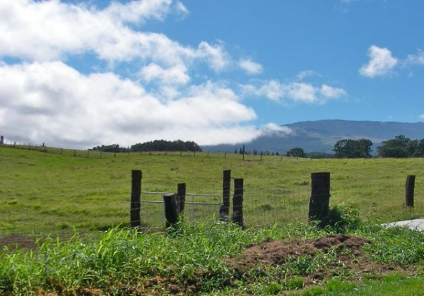 Haiku Maui pasture land