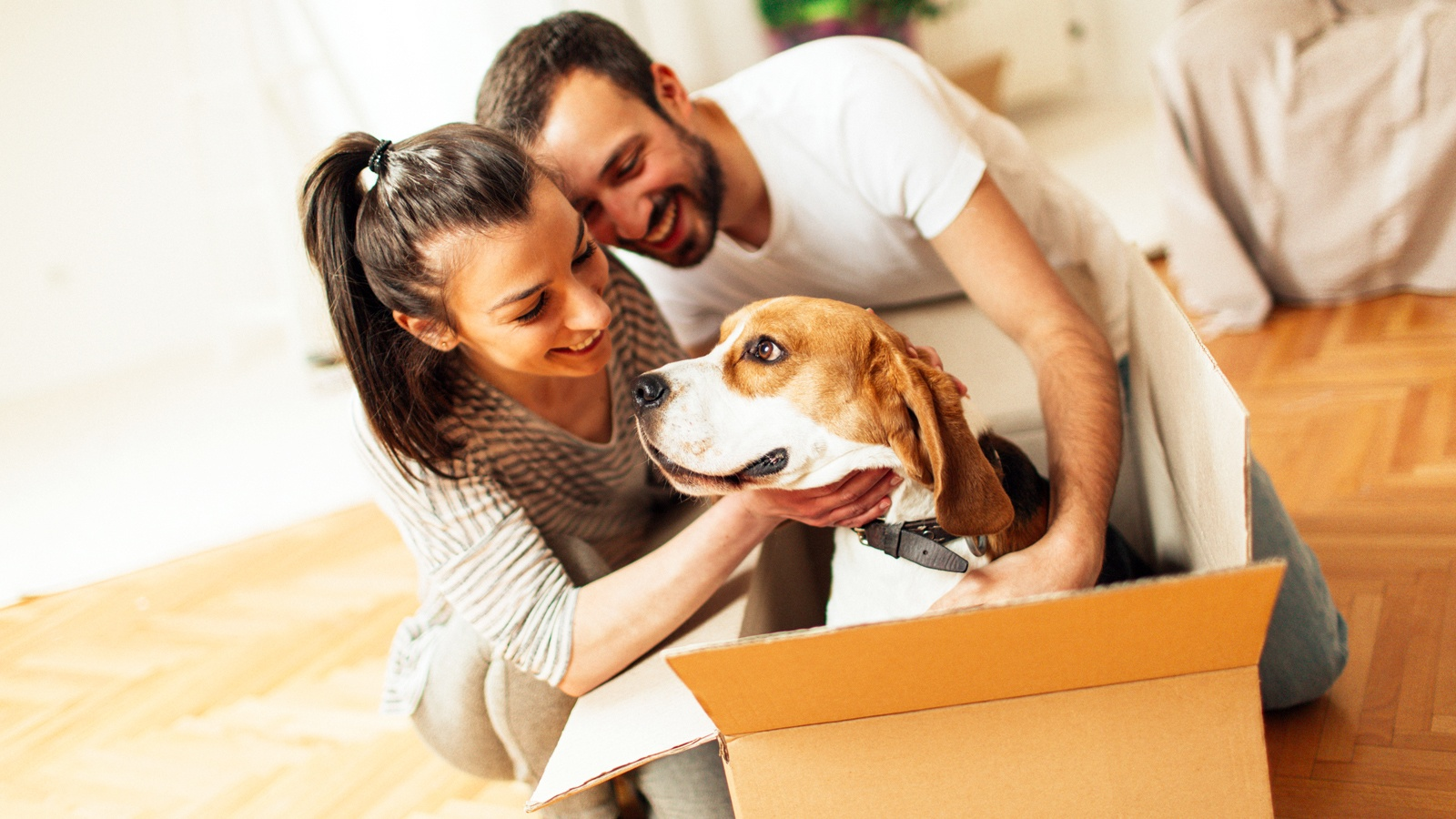 Moving Pets To Hawaii Frequently Asked Questions Faq Hawaii