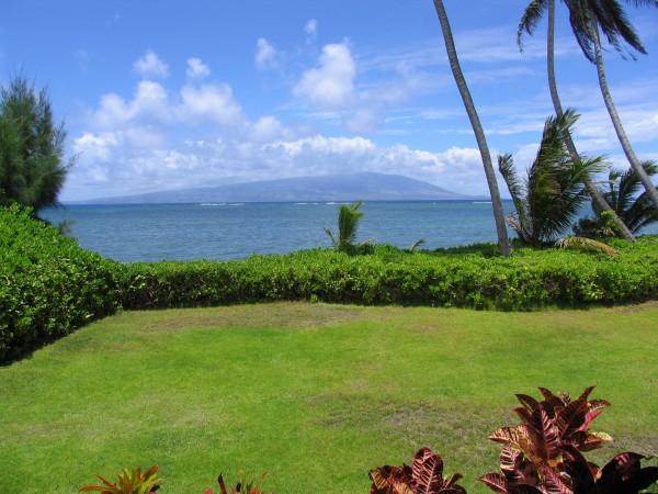 ocean palm tree