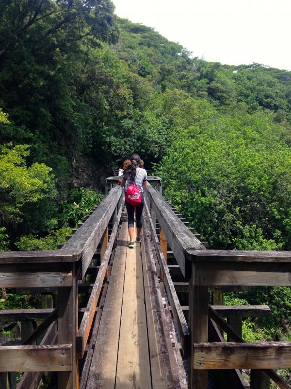 Kohala Waterfall Tour