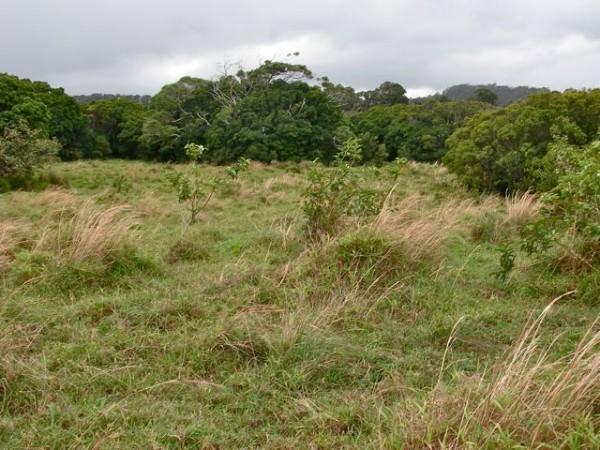 Vacant pasture land in Haiku Maui HI