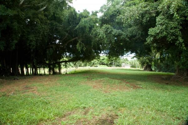 Large Lot in Koloa Estates