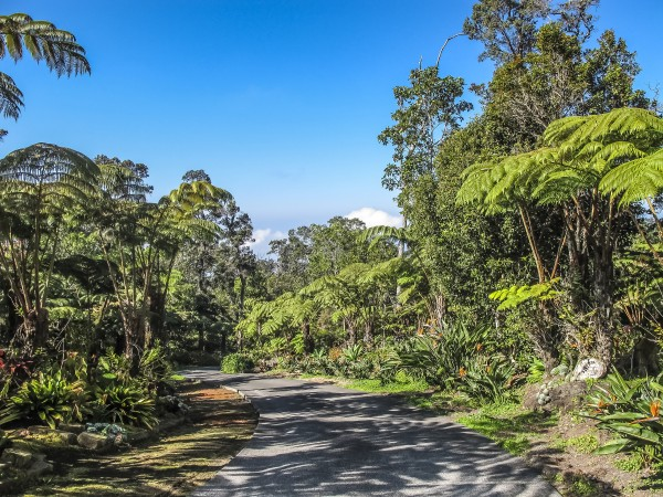 The lush forest of upper Kaloko