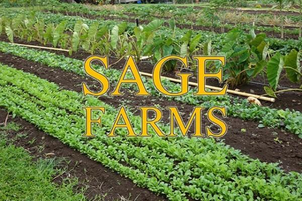 Row Crops at Sage Farms
