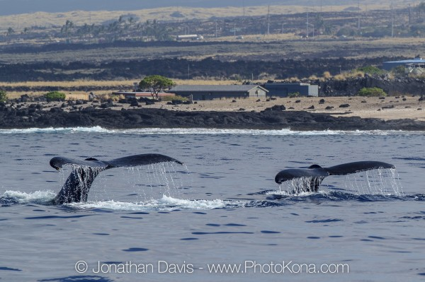 Humpback whale tail wag to say ALOHA (also captured from the boat of Jonathan Davis)