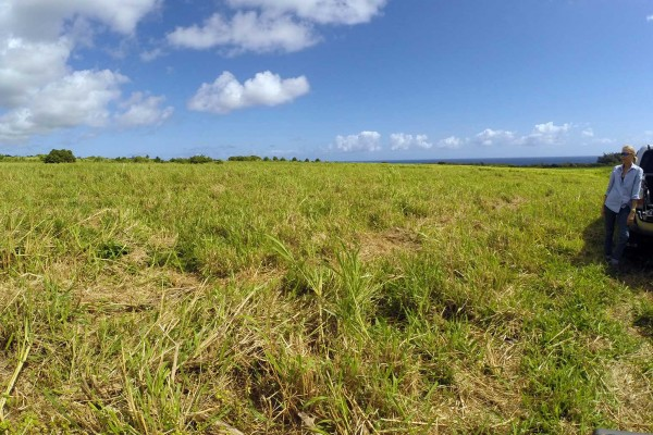Kapanaia ag-zoned lots for sale