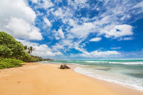 BeachFrontingUnit.JPG_1800x1200_1922457