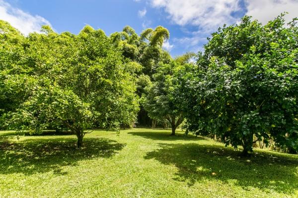 Fruit-Trees_1800x1200_1965501