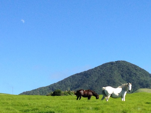 Horses at Kahua Ranch