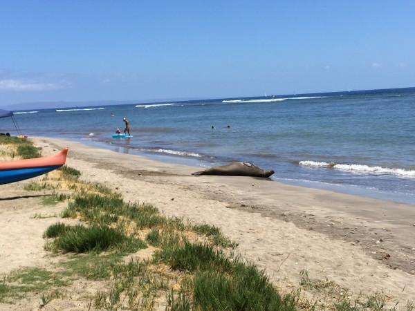 A reason why Front Street in Lahaina is a popular address. Sharkpit Beach.