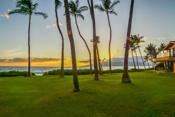 Puamana Hot Sands Grass