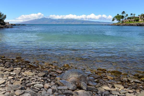 Honokeana Cove 2