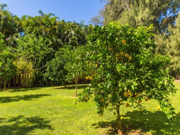 Citrus.jpg_800x600_2283343