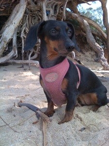 Cookie on the Beach, Kihei