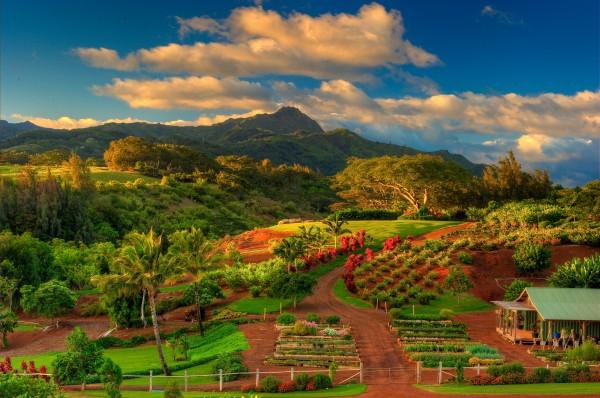 The Upcountry Farm at Kukui'ula Kauai