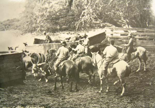 Kwhe Cattle loading 2