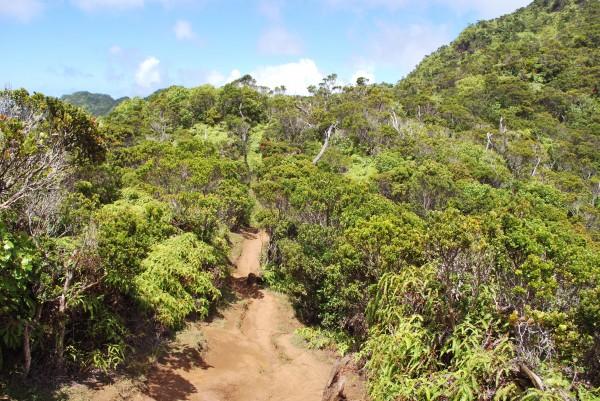 """Kokee State Park Hiking Trail in Kauai, Hawaii."""