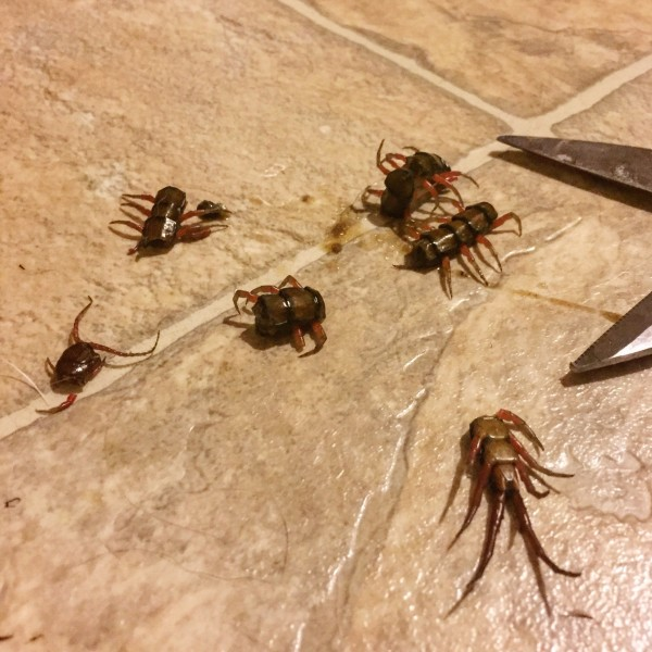 Unwelcome Houseguests Hawaiis Creepy Crawly Home Invaders Hawaii