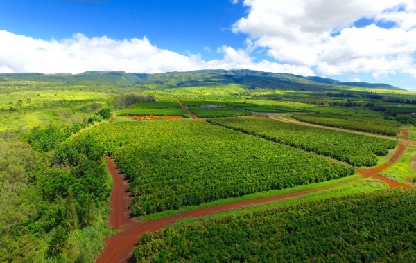 Coffee Farms Mountain view feature