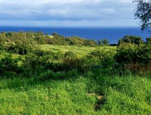 green sloping pastures