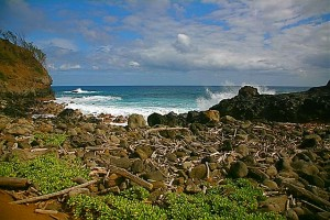 Rocky shoreline with driftwood and sea plants