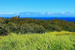 Silhouette of Maui with pasture and ocean in forefront