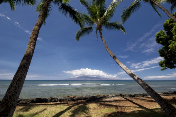 Palm trees at Launiupoko Beach Park, near Lahaina, Maui, Hawaii