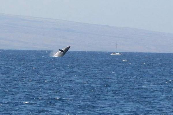 whale-3