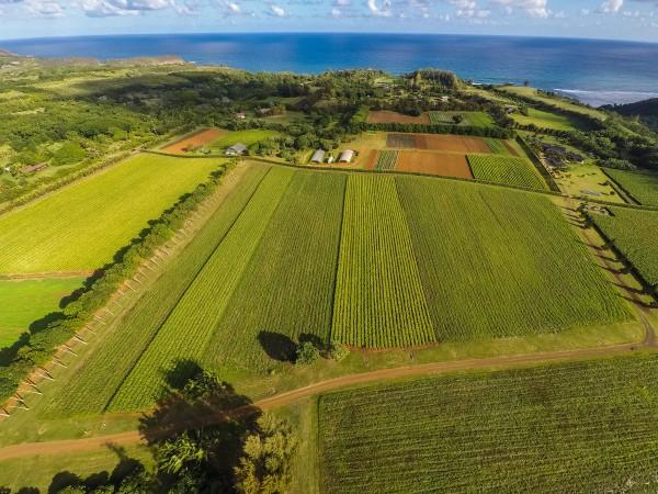 4469w n Waiakalua RD Kilauea-print-043-40-Aerial-4000x3000-300dpi