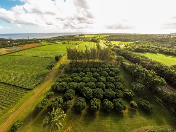 4469w n Waiakalua RD Kilauea-print-049-39-Aerial-4000x3000-300dpi