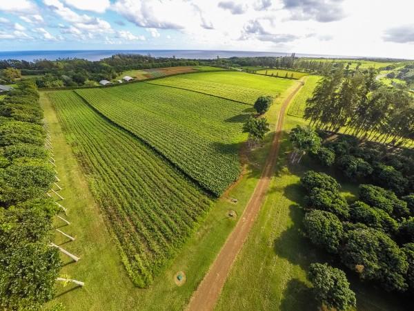 4469w n Waiakalua RD Kilauea-print-052-32-Aerial-4000x3000-300dpi