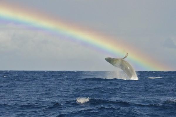 Whale Rainbow by EricOPhotos