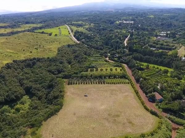 Nahele Rd farm with Haleakala backdrop