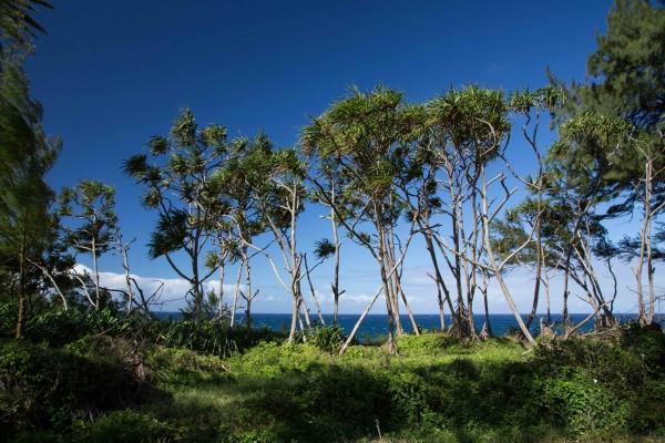 Oceanfront parcel North Kohala for sale