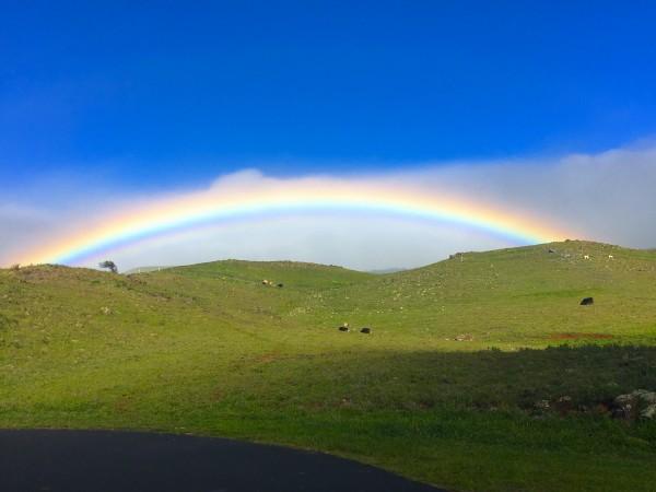 Rainbow 3 copy