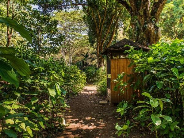 Compost-Toilet_800x600_868315